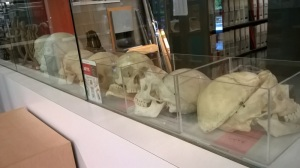 Yes!  Students can check out these skull replicas!