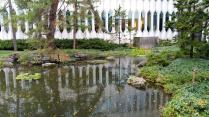 Koi pond in front of the music complex